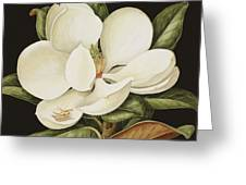 Magnolia Grandiflora Greeting Card by Jenny Barron