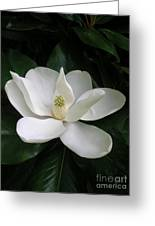 Magnolia Greeting The Day Greeting Card