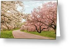 Magnolia Grove Greeting Card