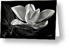 Magnolia In Black And White Greeting Card