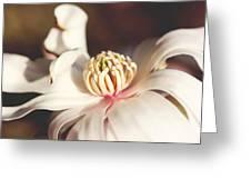 Magnolia In Bloom Greeting Card