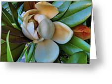 Magnolia In Oxford Greeting Card
