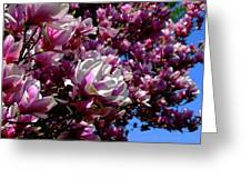 Magnolia In Spring Greeting Card