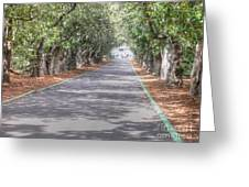 Magnolia Lane Greeting Card