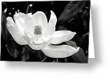 Magnolia Memories 3- By Linda Woods Greeting Card