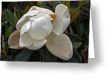 Magnolia No 1 Greeting Card