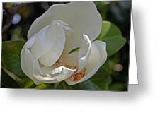 Magnolia No 6 Greeting Card