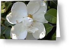 Magnolia No 7 Greeting Card