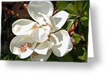 Magnolia No 8 Greeting Card