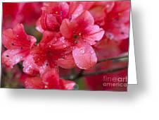 Magnolia Plantation Azaleas Greeting Card