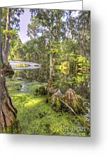 Magnolia Plantation Bridge Cypress Garden Greeting Card