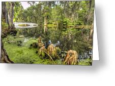 Magnolia Plantation Cypress Garden Greeting Card