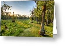Magnolia Plantation Cypress Swamp Sunrise Greeting Card