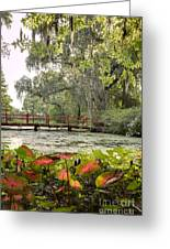 Magnolia Plantation Gardens Photography Greeting Card