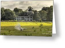Magnolia Plantation House Greeting Card