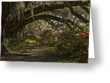 Magnolia Plantation Greeting Card