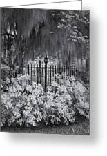 Magnolia Plantation Lightpost Greeting Card