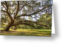 Magnolia Plantation Live Oak Sunrise Greeting Card