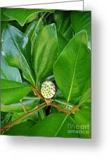 Magnolia Pod Greeting Card