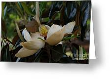 Magnolia Seeds Greeting Card