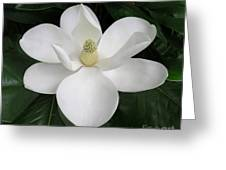 Magnolia Splendor Greeting Card