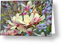 Magnolia Spring Greeting Card
