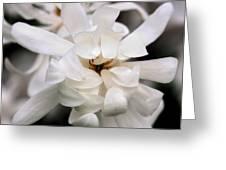 Magnolia Square Greeting Card