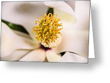 Magnolia Study Greeting Card
