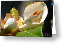 Magnolia Sunburn Greeting Card