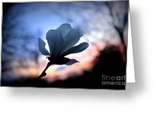 Magnolia Sunset Greeting Card