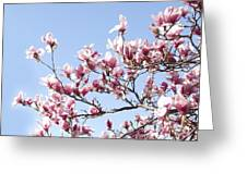 Magnolia Tree Against Blue Sky Greeting Card