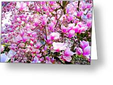 Magnolia Tree Beauty #1 Greeting Card