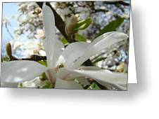 Magnolia Tree Flowers Art Prints White Magnolia Flower Greeting Card