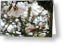 Magnolia Tree Flowers Pink White Magnolia Flowers Spring Artwork Greeting Card