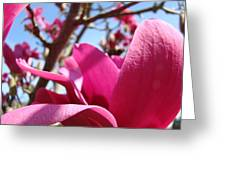 Magnolia Tree Pink Magnoli Flowers Artwork Spring Greeting Card