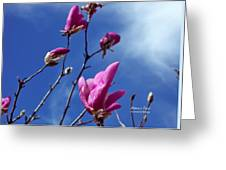 Magnolia Tulip Tree Greeting Card