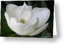 Magnolia Unfolding Greeting Card