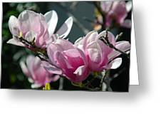 Magnolias Are Blooming Greeting Card