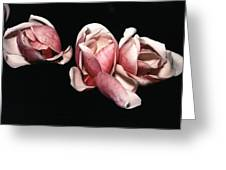 Magnolias At Night Greeting Card