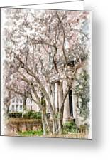 Magnolias In Back Bay Greeting Card