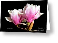 Magnolias In Spring Bloom Greeting Card