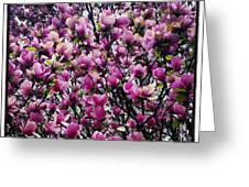 Magnolias In Spring Greeting Card