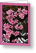 Magnolias In Spring Greeting Card
