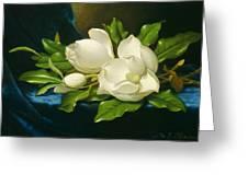 Magnolias On A Blue Velvet Cloth Greeting Card