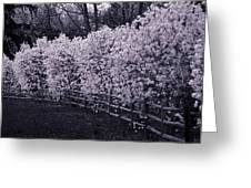 Magnolias In Llewellyn Park, West Orange, New Jersey Greeting Card