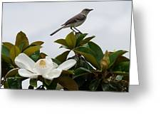 Magolia Bloom With Mocking Bird Greeting Card by Julie Cameron