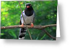 Magpie I Greeting Card