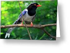 Magpie II Enhanced Greeting Card
