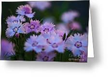 Maiden Pink On My Mind Greeting Card