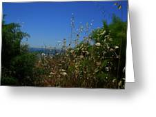 Maidenhair Ferns And Grasses On The Bluff Greeting Card
